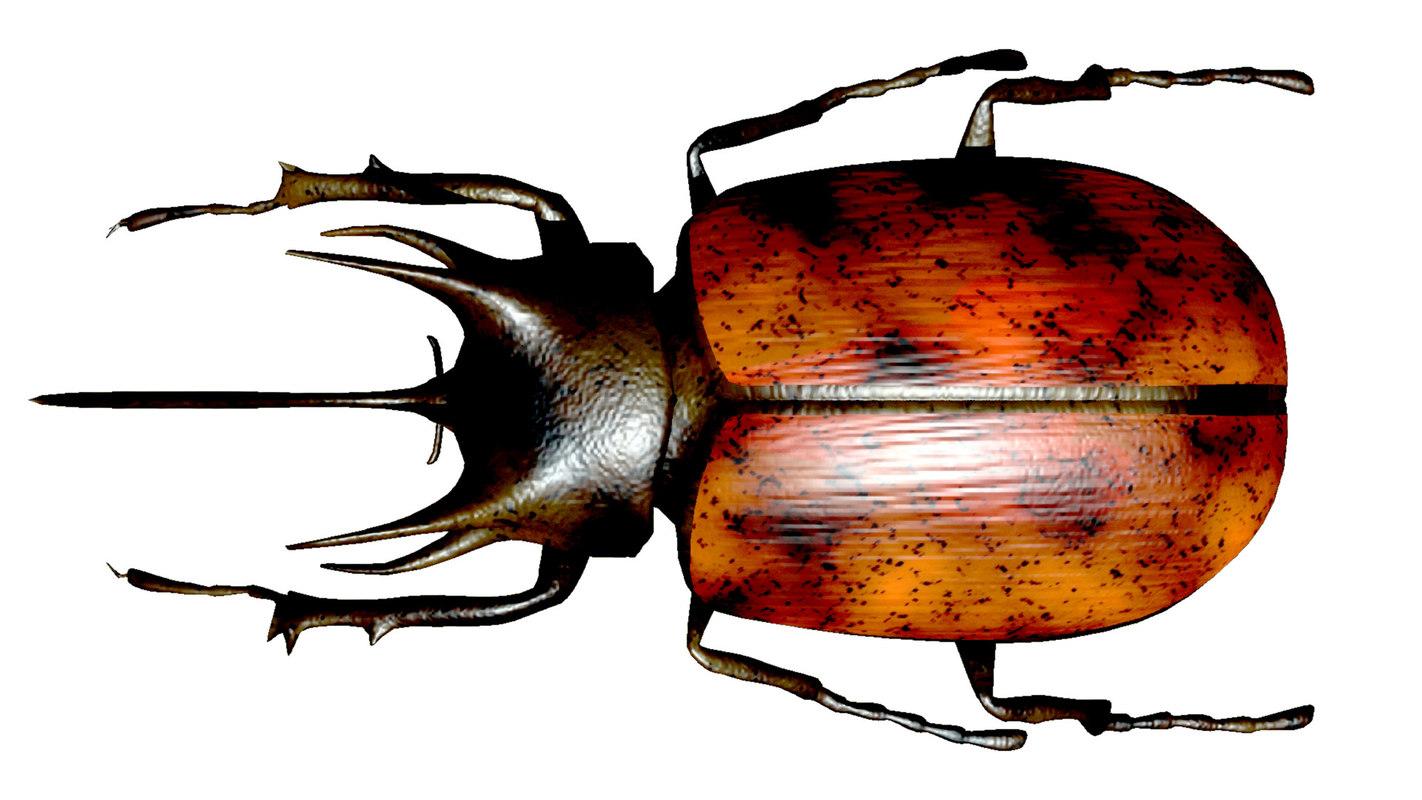 bug body